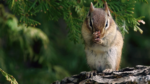 Charming Indian Squirrel Wallpaper | HD Wallpapers