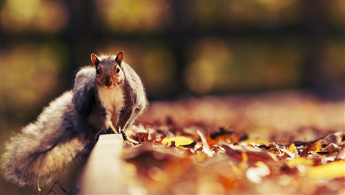 Superb HD Image of Squirrel