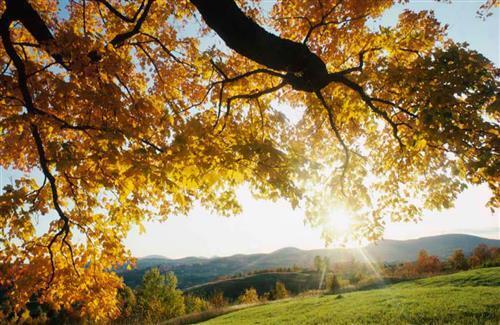 Dry Leaves Tree On Summer Season Hd Wallpaper Hd Wallpapers