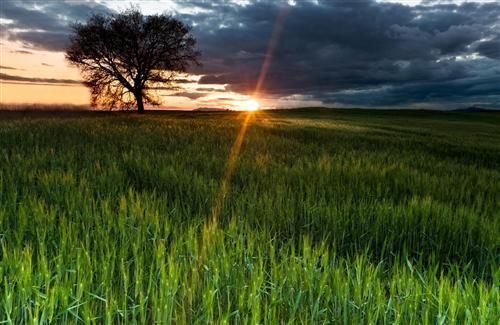 Nice Sunset View Green Grass Free Wallpapers