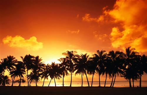 Coconut Tree Row During Sunset