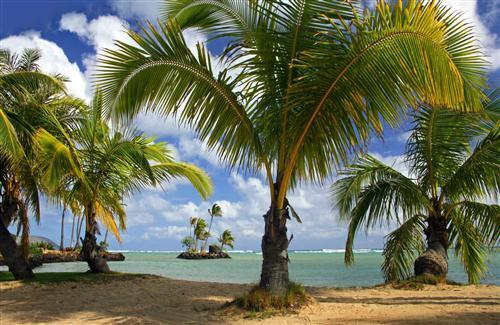 Hd Coconut Tree Seaside Landscape Nature Wallpaper Living: Pics Of Coconut Tree On Beach
