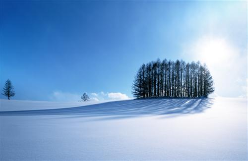 Amazing Winter and Tress Row Wallpaper