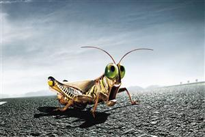 3D Insects Photo
