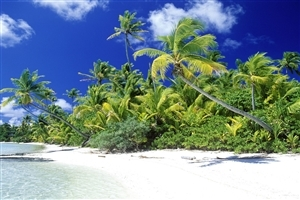 Amazing Palm Beach Solomon Islands Touris Place HD Wallpaper