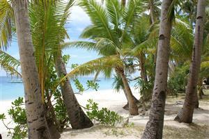 Best Coconut Trees at Beach Wallpaper