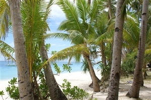 Beautiful Beach and Coconut Tree Photo
