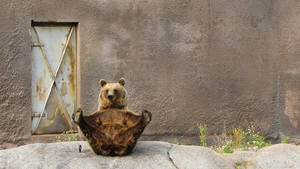 Bear Doing Yoga Funny Wallpaper