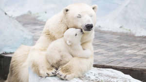 Child Bear Sleeping and Hug With Mother