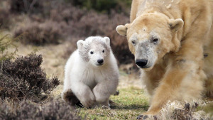Cute White Child Bear with Mother