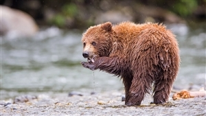Lovely Animal Bear Baby Photography