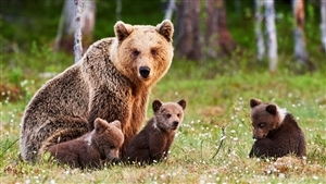 Mother Bear with Her Lovely Children