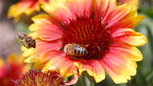 Bee on Colorful Flower