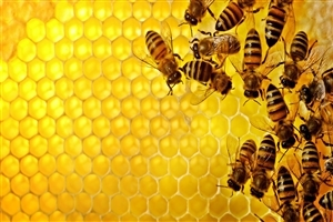 Group of Bee HD Wallpapers