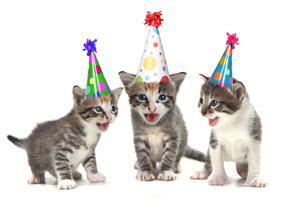 Kittens Celebrate Birthday