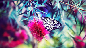 Beautiful Butterfly 5K Nature Wallpaper