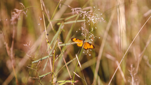 Butterfly Baby on Dry Grass 5K Wallpaper