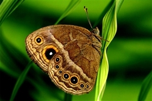 Butterfly HD Photo