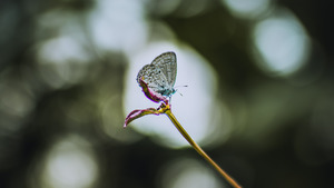 Butterfly Little Baby 4K Wallpaper