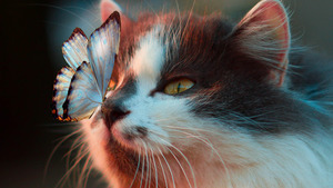 Butterfly On Cute Cat Face