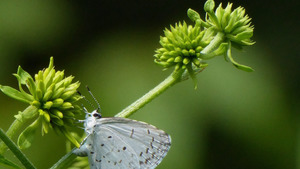 Butterfly Sitting on Green Flower