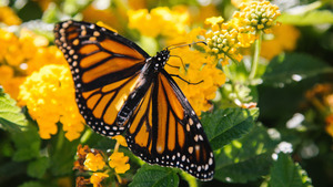 Butterfly on Beautiful Yellow Flower 4K Wallpaper