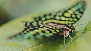 Butterfly on Green Leaf 5K Wallpaper