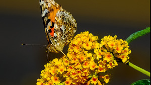 Butterfly on Yellow Flower Dazzling Wallpaper