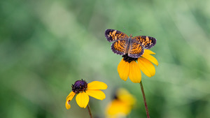 Butterfly on Yellow Flower Superior 4K Wallpaper