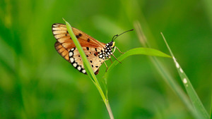 Butterfly on a Blade of Grass 5K Wallpaper