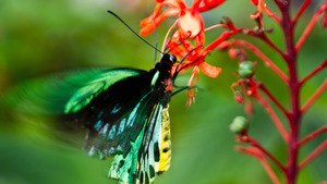 Colorful Butterfly on Red Flower 5K Wallpaper