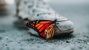 Cute Butterfly on Shoes 4K Wallpaper