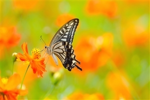 Designing Wings of Butterfly Photo
