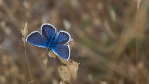Gorgeous Blue Butterfly 5K Wallpaper