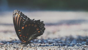 Insect Butterfly 4K Wallpaper