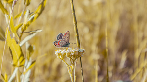 Little Butterfly on Grass Flower 5K Wallpaper