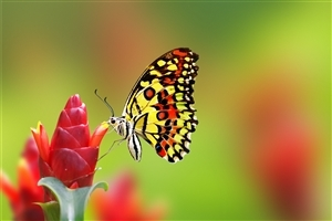 Nice Butterfly on Flower HD Wallpaper