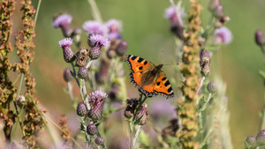 Orange Butterfly on Meadow 5K Wallpaper