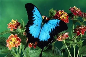 Sky Dark Color Butterfly Nice Photos