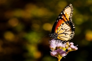 Wonderful HD Photo of Butterfly on Flower