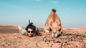 Camel Sleeping With Human Funny 5K Wallpaper