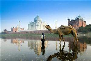 Camel at Taj Mahal