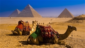 Camel in Great Pyramid of Giza