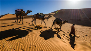 Camel in Sahara Desert Morocco 5K Wallpaper