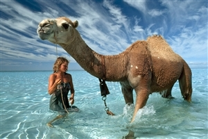 Camel in Sea HD Wallpaper
