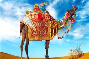 Decorative Camel in Desert HD Photo