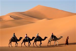 Four Camels in Desert