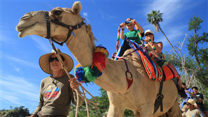 Tourist Peoples Enjoying Riding in Camel