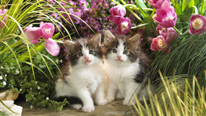 2 Cute Cat Baby in Flower Garden