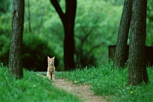A Beautiful Cat Standing in Jungle and Look Quitly Animal Pets Photos